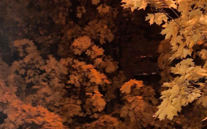 Почувствовала осень